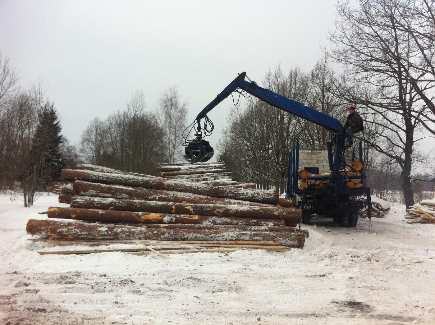 Holzarten Und Ihre Eigenschaften